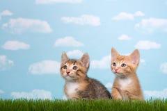 在高草的两只小猫与蓝天背景白色蓬松 免版税库存照片