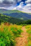 在高草的山道路 免版税图库摄影