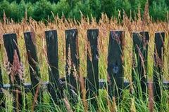 在高草的老木篱芭 免版税库存照片