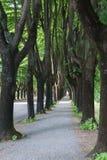 在高落叶树之间的被铺的空的边路 免版税库存照片