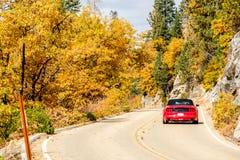 在高速公路的红色跑车秋天,美洲杉国家公园 库存照片