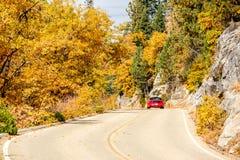 在高速公路的红色跑车秋天,美洲杉国家公园 免版税库存图片