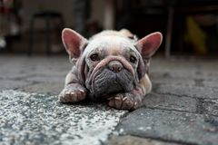 在高雄街道上的老狗在台湾 免版税库存图片