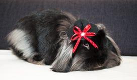 在高顶丝质礼帽的逗人喜爱的兔子 免版税库存照片