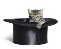 在高顶丝质礼帽的滑稽的小猫 图库摄影