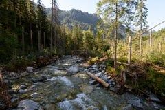 在高Tatra的小河 免版税库存图片