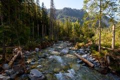 在高Tatra的小河 免版税库存照片
