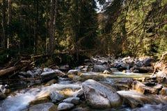 在高Tatra的小河 库存图片