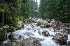 在高Tatras的小河 库存照片
