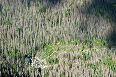 在高Tatras的击倒的树 图库摄影