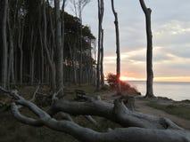 在鬼魂森林的日落波罗的海的德国Nienhagen 库存照片