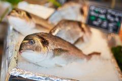在鱼市上的许多攫夺者 图库摄影