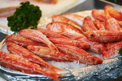 在鱼市上的许多surmullets 免版税图库摄影