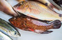 在鱼市桌上的布朗热带鱼捕获 厨师的镶边珊瑚鱼 图库摄影