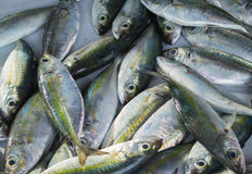 在鱼市桌上的银色绿色热带鱼捕获 免版税库存照片