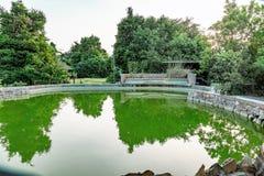 在鱼池的树反射 免版税库存图片