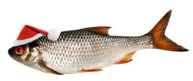 在鱼的圣诞老人帽子 图库摄影