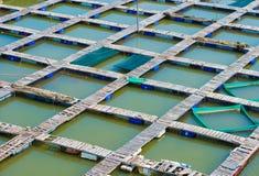 在鱼繁殖的农场,越南的人行桥 免版税图库摄影