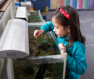 在鱼缸的女孩哺养的鱼 免版税库存图片