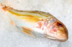 在鱼贩子的摊位的冰的鲂鱼 免版税库存照片