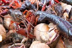 在鱼贩子的河小龙虾 免版税图库摄影