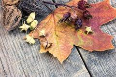 在鲁斯的干植物,莓果,胡说和黄色秋天槭树事假 库存照片