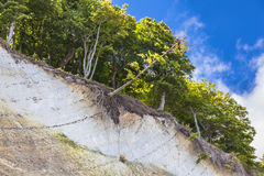 在鲁根岛的白色峭壁 免版税库存图片