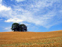 在鲁根岛的麦地 免版税库存照片