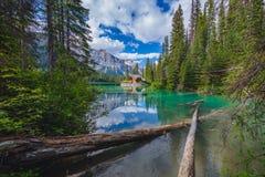 在鲜绿色湖的客舱加拿大人的落矶山 库存图片