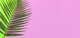 在鲜绿色的桃红色背景的热带棕榈叶 r 夏天背景,自然 创造性最小 库存图片