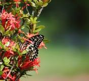 在鲜花的美丽的蝴蝶在庭院里 免版税库存照片