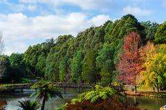 在鲜绿色湖的一座桥梁Dandenong的在澳大利亚排列 库存照片