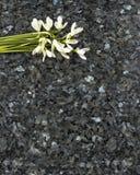 在鲜绿色珍珠花岗岩worktop的Snowdrop花 免版税库存图片