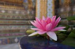 在鲜绿色菩萨寺庙的桃红色荷花  库存照片