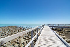 在鲨鱼湾西澳州的Stromatolites 图库摄影