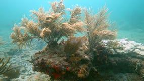 在鲳参海滩, FL的浅礁石 免版税库存照片