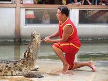 在鳄鱼农场的鳄鱼展示12月 图库摄影