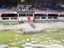 在鳄鱼农场的鳄鱼展示 库存照片