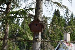 在鸟房子外面的山雀飞行 库存照片