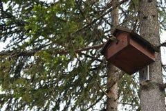 在鸟房子外面的山雀飞行 免版税库存图片