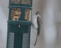在鸟的额嘴的雪花 免版税库存照片