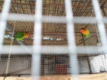 在鸟笼的两只鸟 免版税库存照片