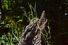 在鸟群的被结合的水蛇 库存图片