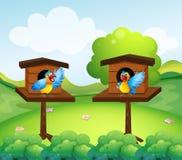 在鸟舍的两只鹦鹉 皇族释放例证