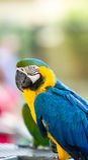 在鸟舍,约翰内斯堡的美好的maccaw 免版税图库摄影