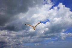 在鸟黑暗的飞行海洋之上开张海鸥翼 免版税库存图片