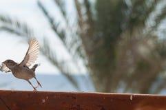 在鸟黑暗的飞行海洋之上开张海鸥翼 免版税库存照片