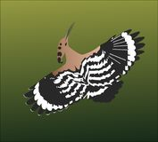 在鸟黑暗的飞行海洋之上开张海鸥翼 免版税图库摄影