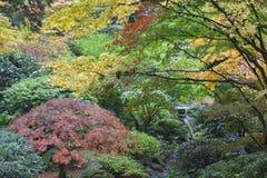 在鸡爪枫树中的石灯笼在秋天季节 免版税库存图片