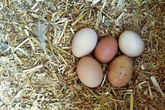在鸡窝的鸡蛋 免版税库存图片